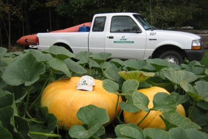 large pumpkin wearing a baseball cap