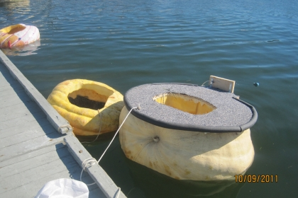large floating pumpkin tied to dock
