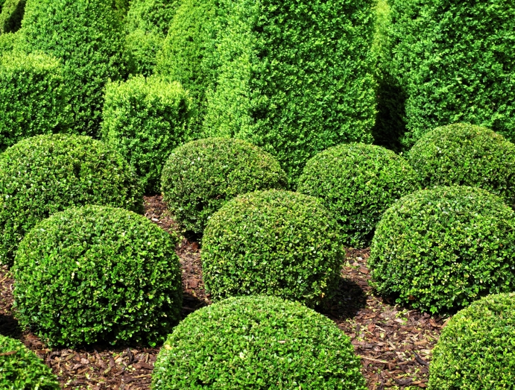 Fertilizer bulk casella for Green bushes for landscaping